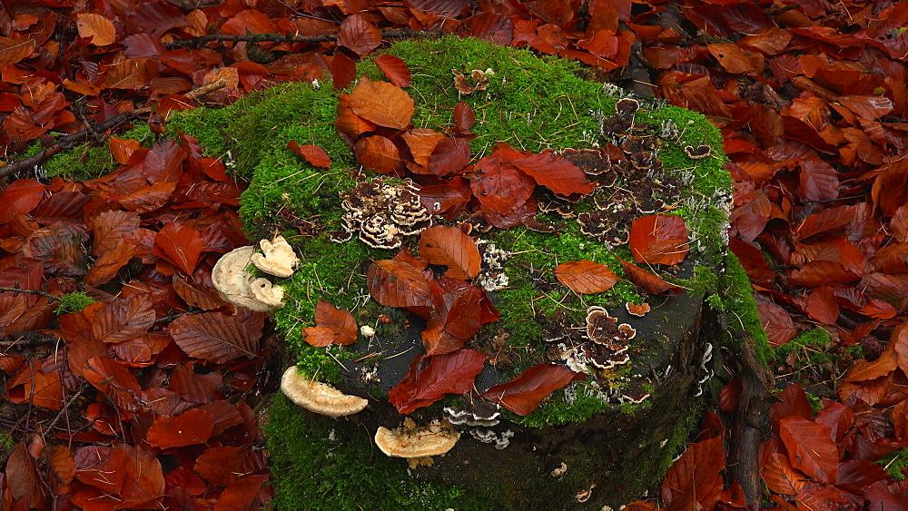 Tree fungi on the tree trunk - 396-7731