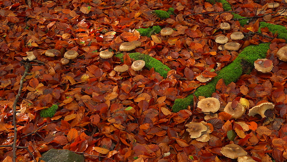 Wild mushrooms in autumn forest - 396-7732
