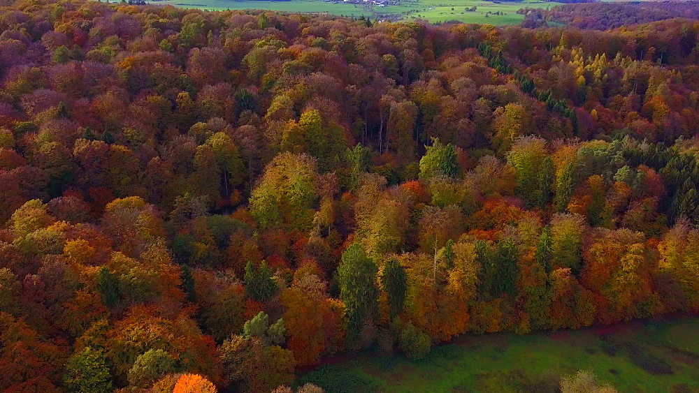 Aerial view of a autumn forest, Mannebach, Rhineland-Palatinate, Germany - 396-7753