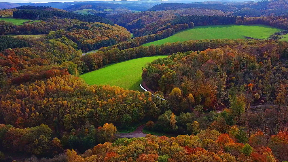 Aerial view of a autumn forest, Mannebach, Rhineland-Palatinate, Germany - 396-7754