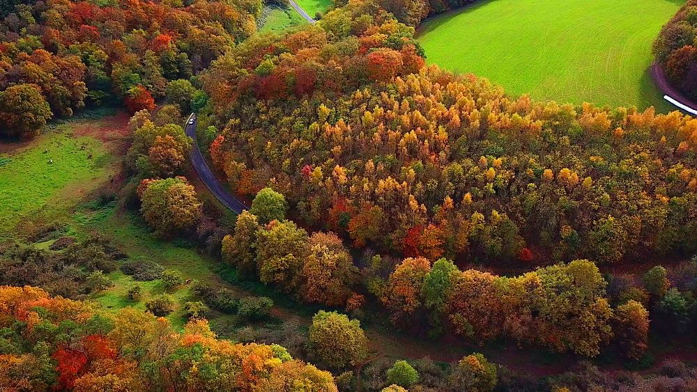 Aerial view of a autumn forest, Mannebach, Rhineland-Palatinate, Germany - 396-7755