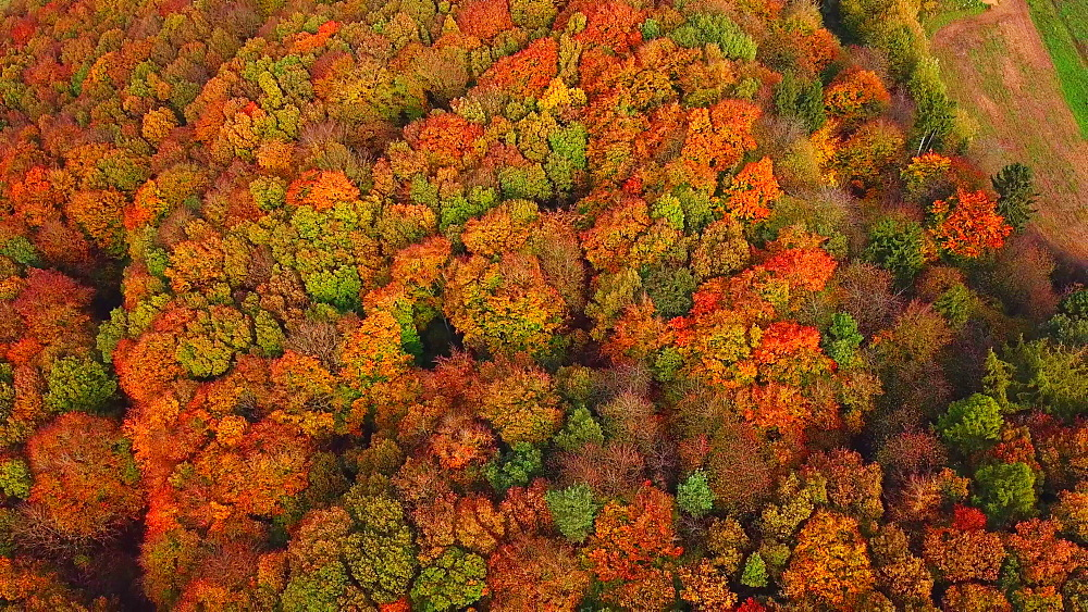 Aerial view of a autumn forest, Mannebach, Rhineland-Palatinate, Germany - 396-7757