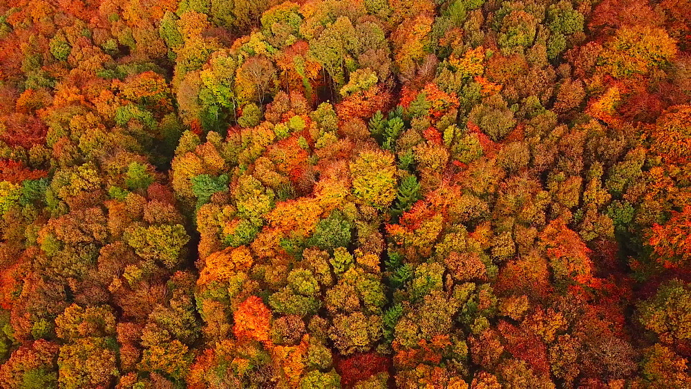 Aerial view of a autumn forest, Mannebach, Rhineland-Palatinate, Germany - 396-7759