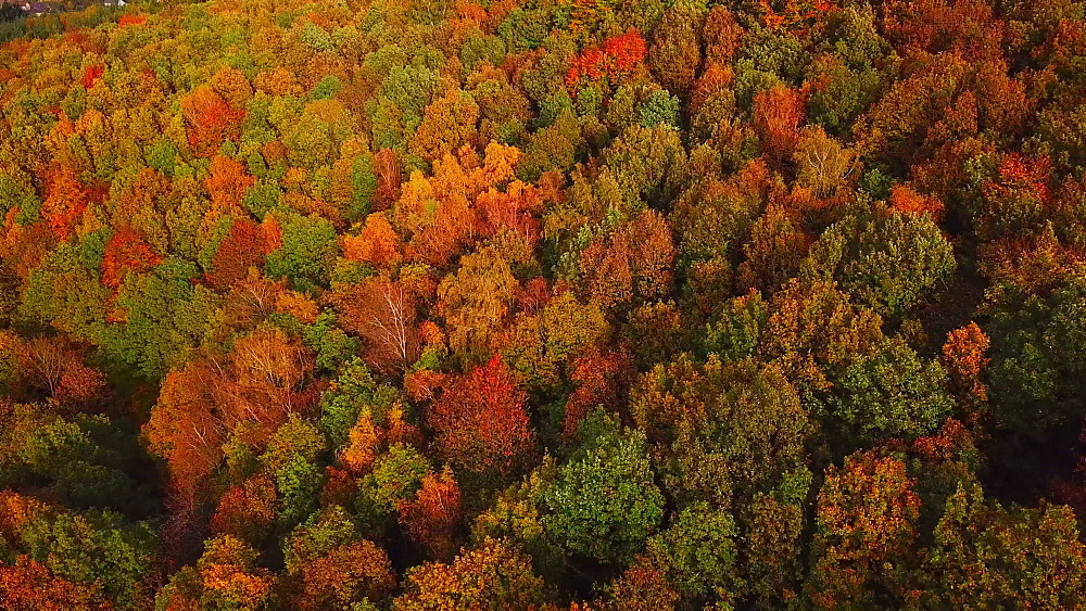 Aerial view of a autumn forest, Mannebach, Rhineland-Palatinate, Germany - 396-7760