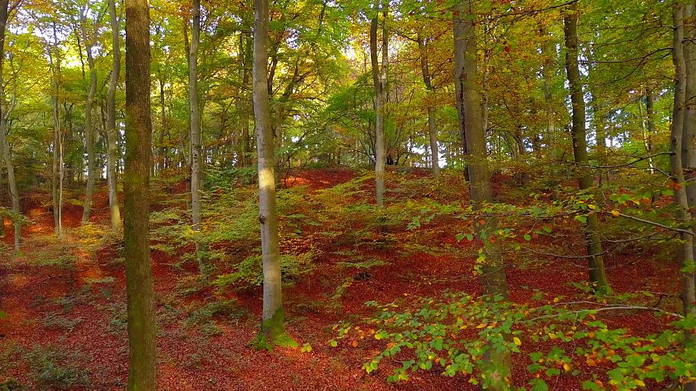 Flight through an autumn beech forest - 396-7765