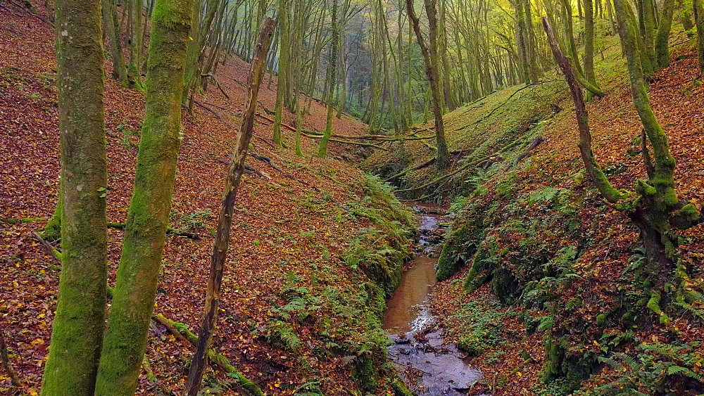 Flight over a little brook in an autumn forest, Kastel-Staadt, Rhineland-Palatinate, Germany, Europe