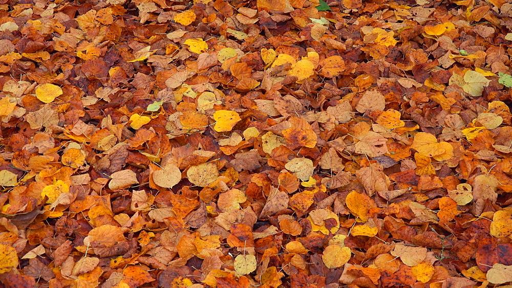Autumn foliage - 396-7773