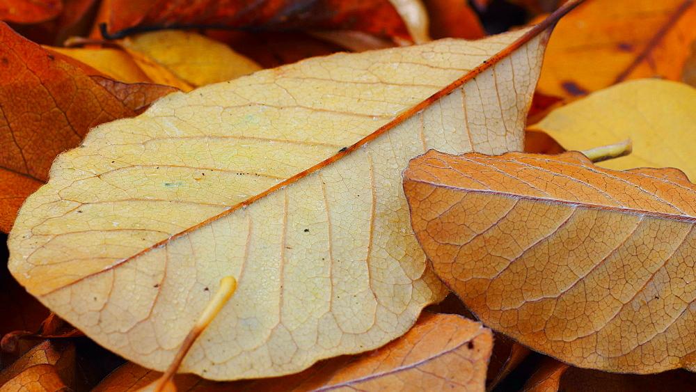 Autumn foliage - 396-7774