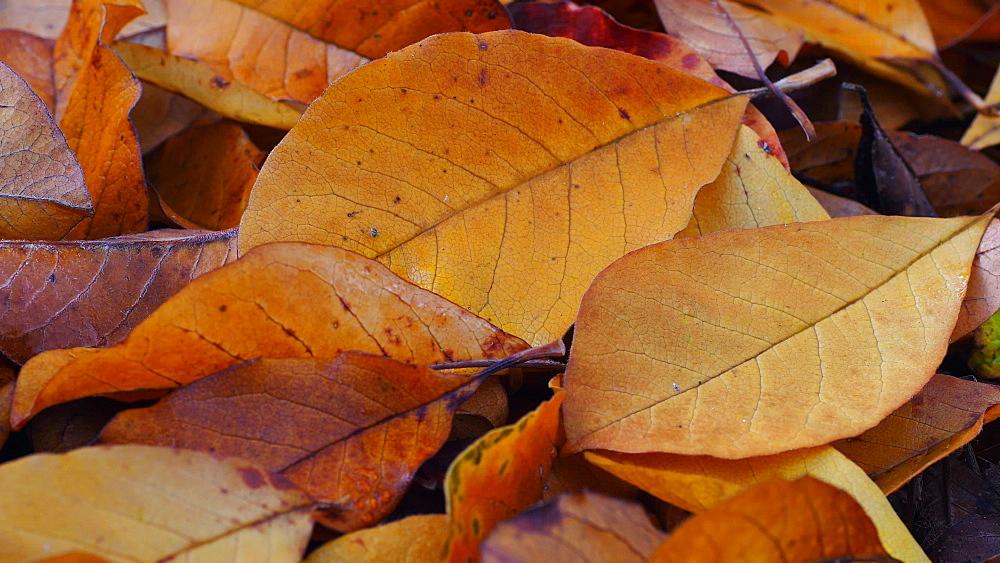 Autumn foliage - 396-7775