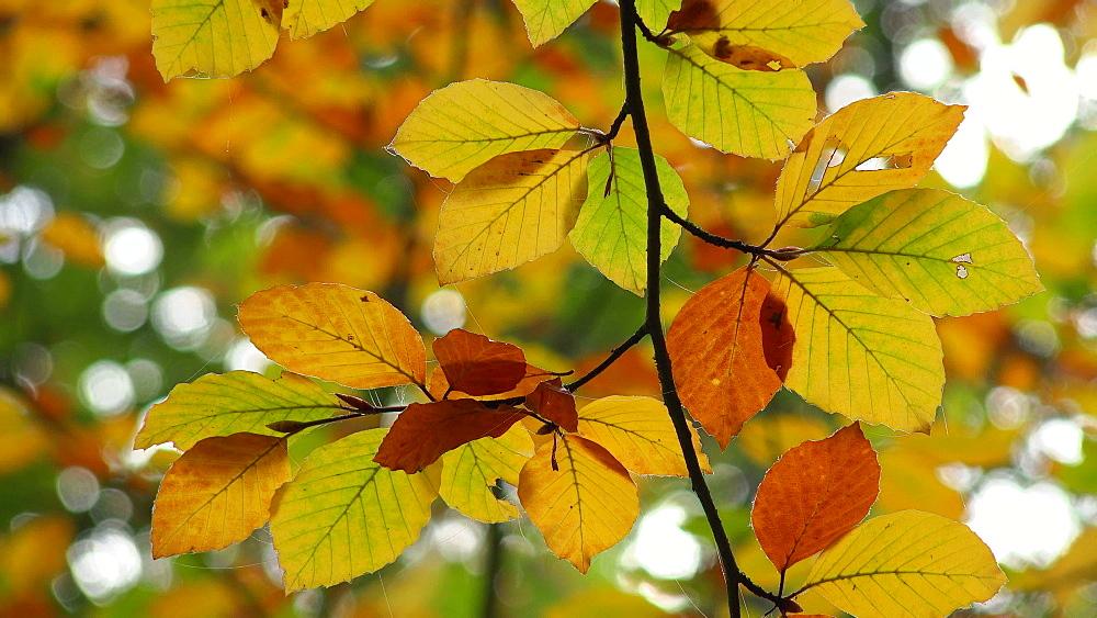 Autumn foliage - 396-7776