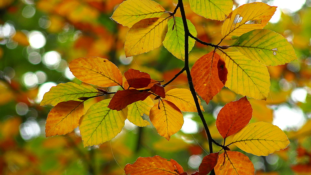 Autumn foliage - 396-7777