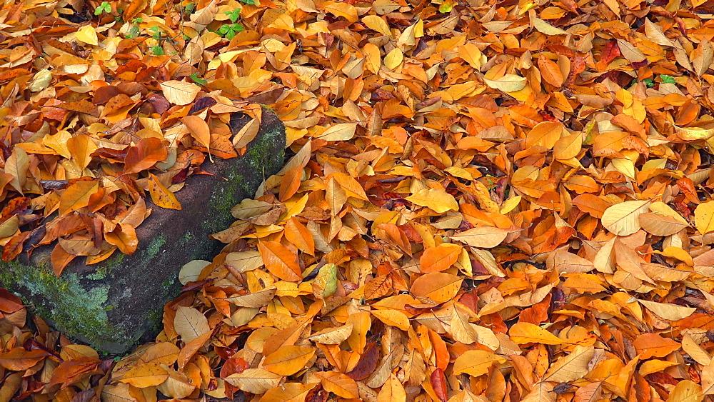 Autumn foliage - 396-7778