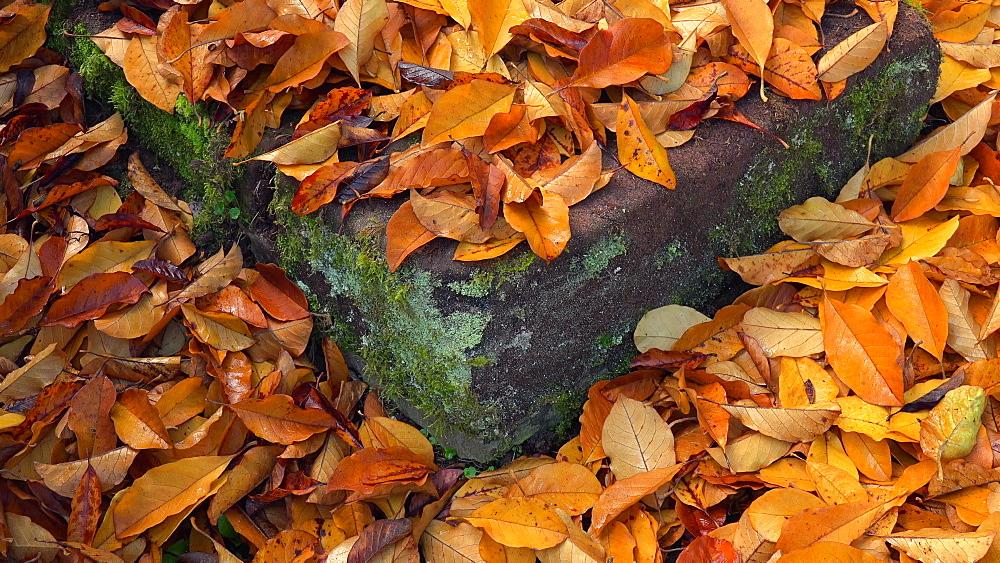 Autumn foliage - 396-7780