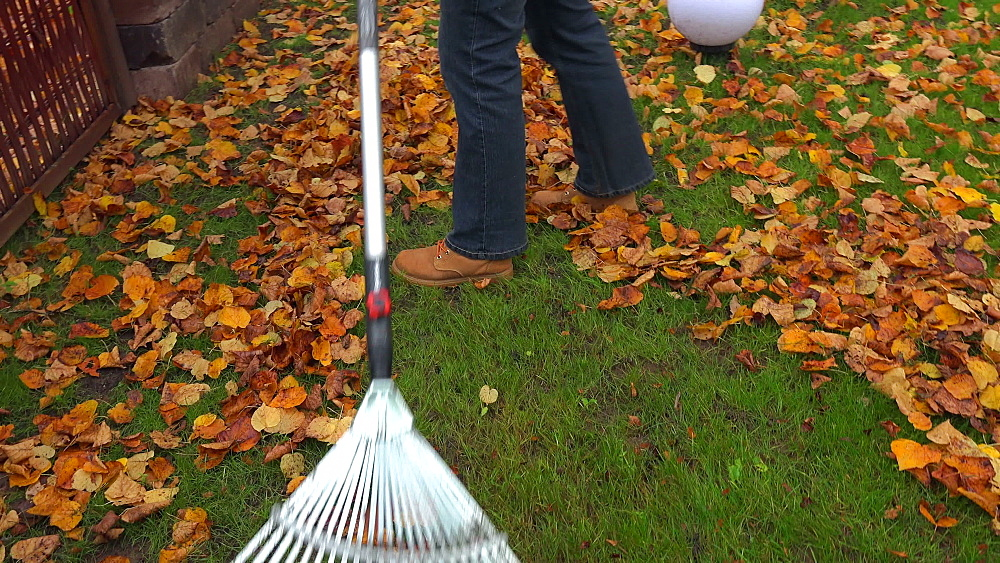 Raking autumn leaves from meadow - 396-7783