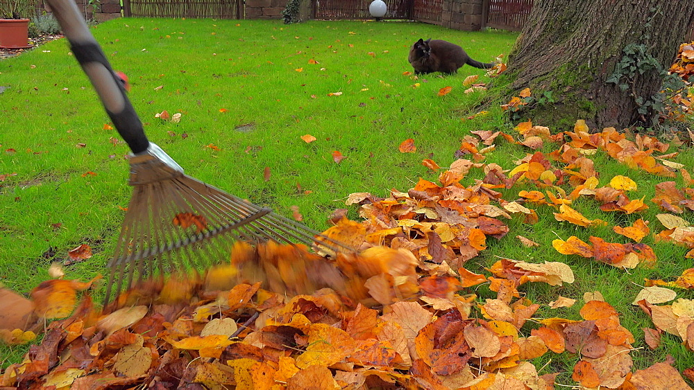 Raking autumn leaves from meadow - 396-7787