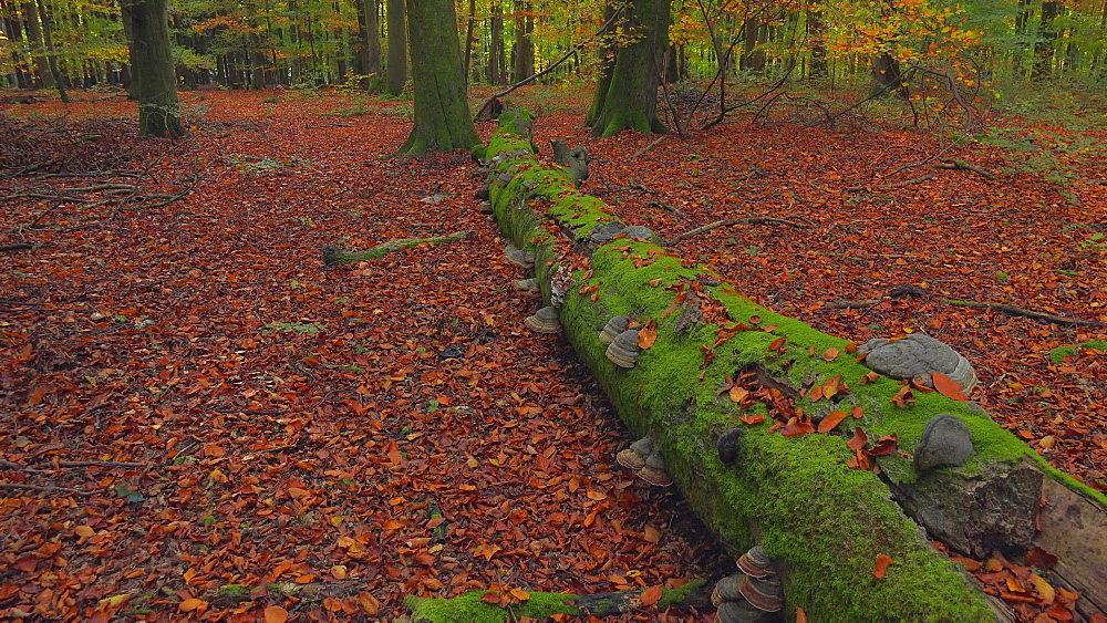 Dead wood in autumnal forest - 396-7792