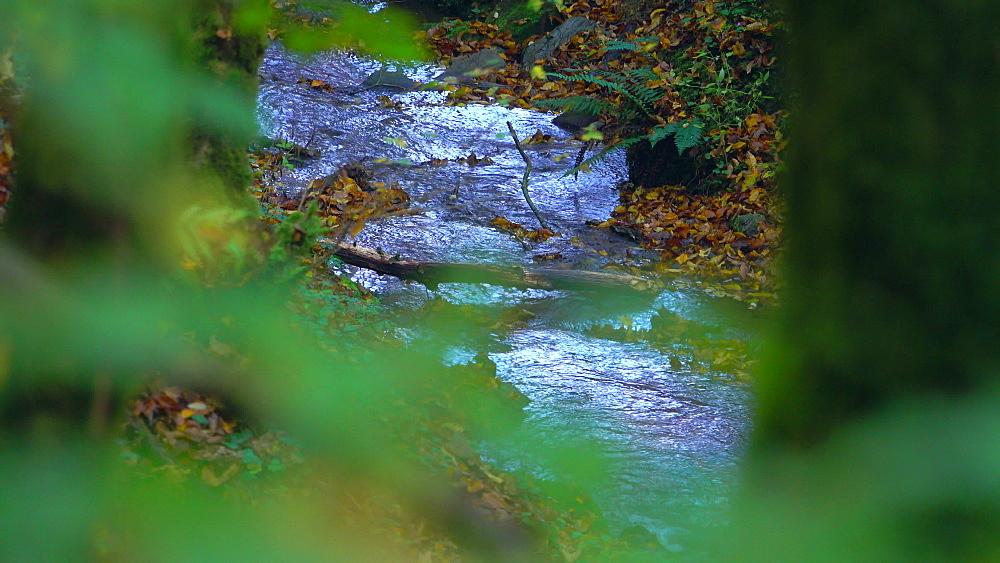 Little forest brook - 396-7800