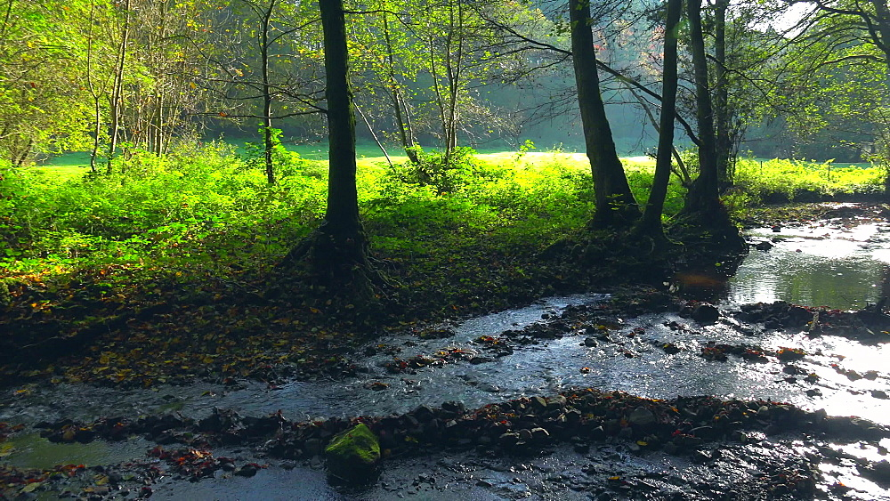 Forest brook in sunlight - 396-7802