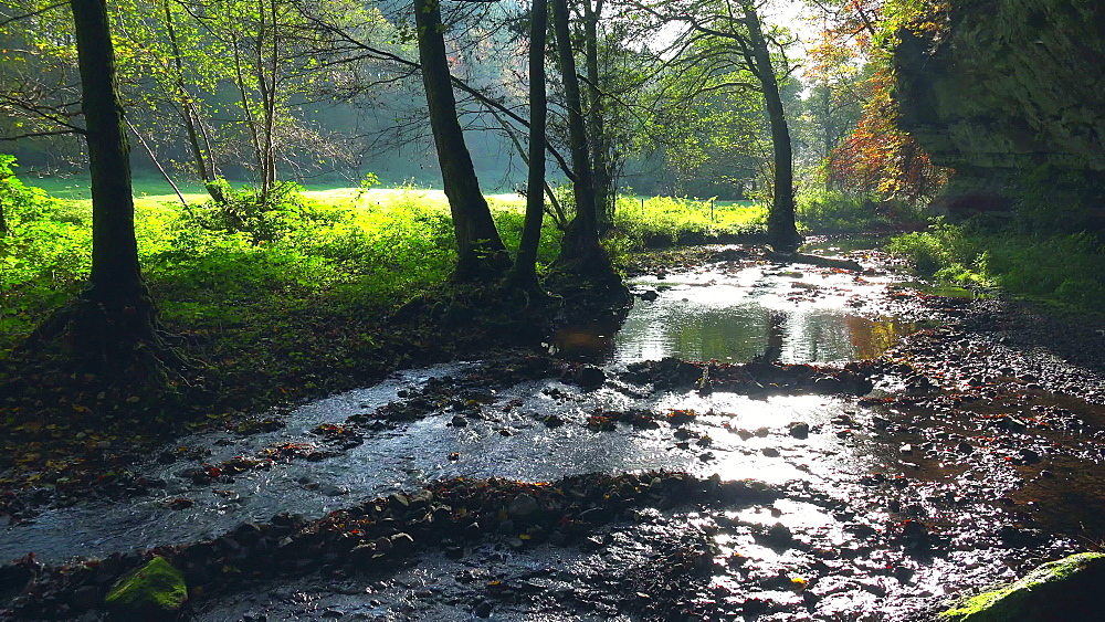 Forest brook in sunlight - 396-7803