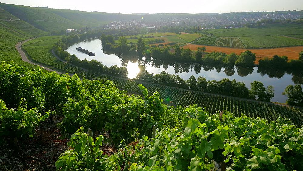 Neckar River near Mundelsheim am Neckar close to Ludwigsburg, Baden-Wurttemberg, Germany, Europe