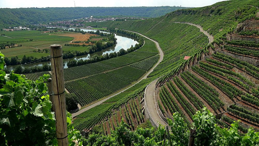 Vineyards in the Neckar Valley near Mundelsheim am Neckar close to Ludwigsburg, Baden-Wurttemberg, Germany, Europe