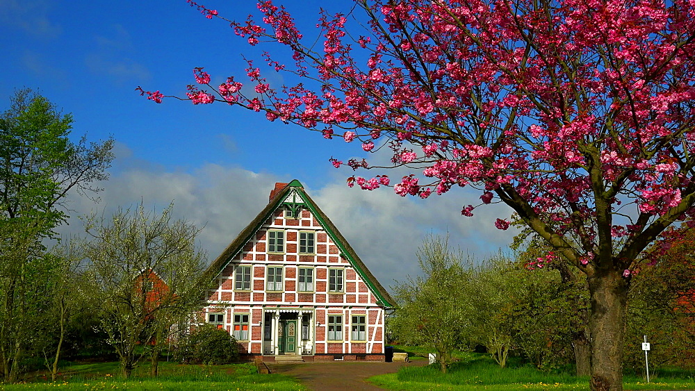Half-timbered house near Jork, typical of the Altes Land Region, Lower Saxony, Germany, Europe