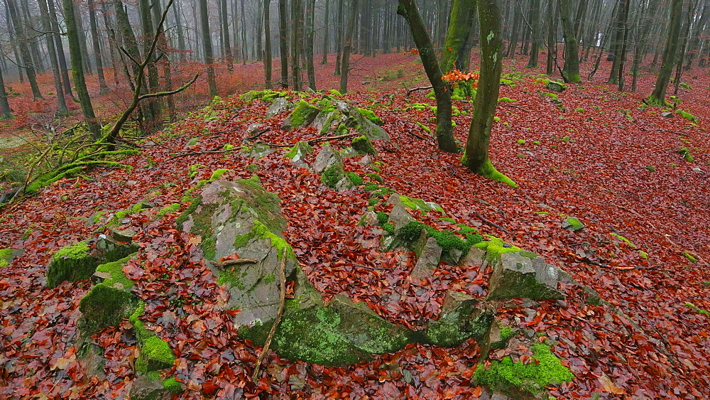 Dead wood and tree roots in a forest, Mount Maunert, Taben-Rodt, Saar Valley, Rhineland-Palatinate, Germany - 396-8219