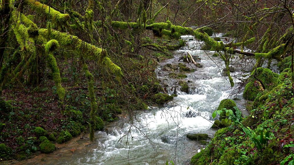Forest brook Helterbach near Palzem-Helfant, Moselle Valley, Rhineland-Palatinate, Germany - 396-8226