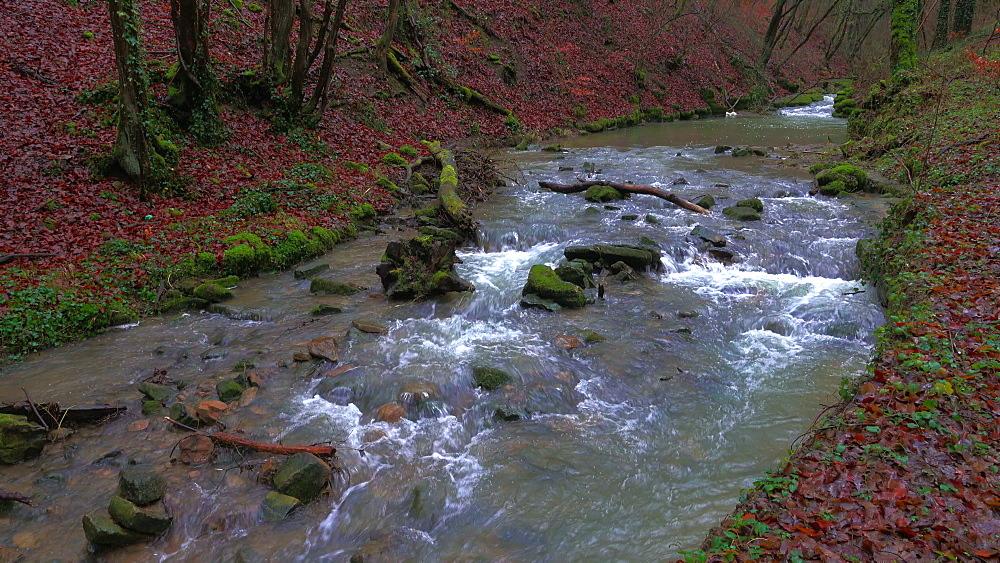 Forest brook Helterbach near Palzem-Helfant, Moselle Valley, Rhineland-Palatinate, Germany - 396-8227