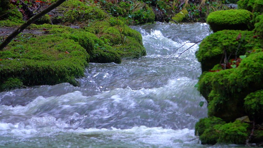 Forest brook Helterbach near Palzem-Helfant, Moselle Valley, Rhineland-Palatinate, Germany - 396-8229