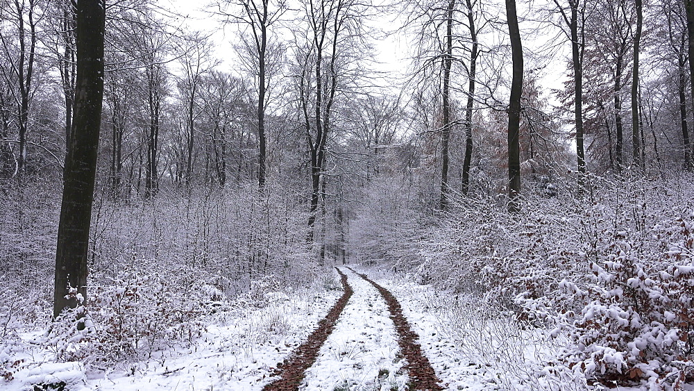 Snow covered forest and forest track in winter, Serrig, Saar Valley, Rhineland-Palatinate, Germany, Europe