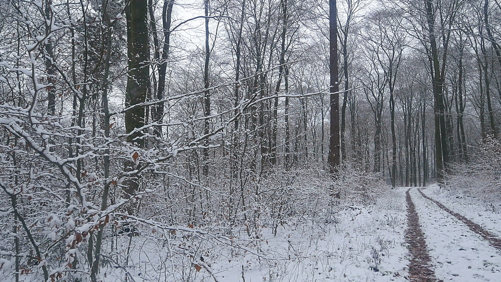 Snow covered forest in winter, Serrig, Saar Valley, Rhineland-Palatinate, Germany - 396-8284