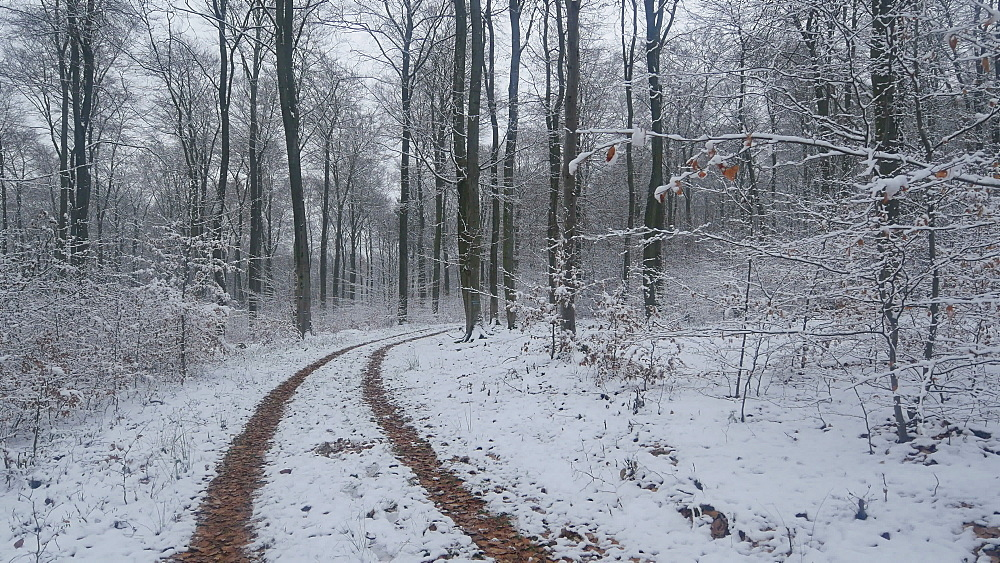 Snow covered forest in winter, Serrig, Saar Valley, Rhineland-Palatinate, Germany - 396-8286