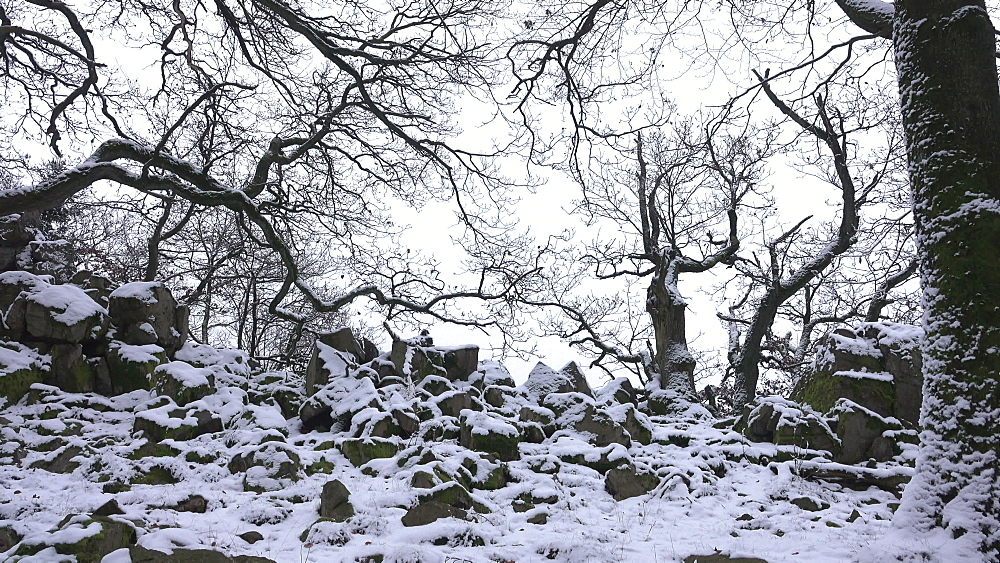 Snow covered rocks and trees at Mount Maunert, Taben-Rodt, Saar Valley, Rhineland-Palatinate, Germany, Europe
