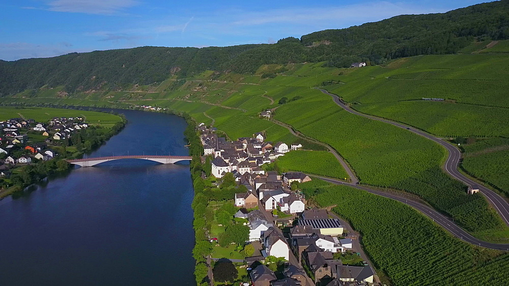 Aerial view of the wine village of Piesport, River Moselle, Moselle Valley, Rhineland-Palatinate, Germany - 396-8668