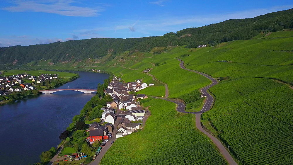 Aerial view of the wine village of Piesport, River Moselle, Moselle Valley, Rhineland-Palatinate, Germany - 396-8671