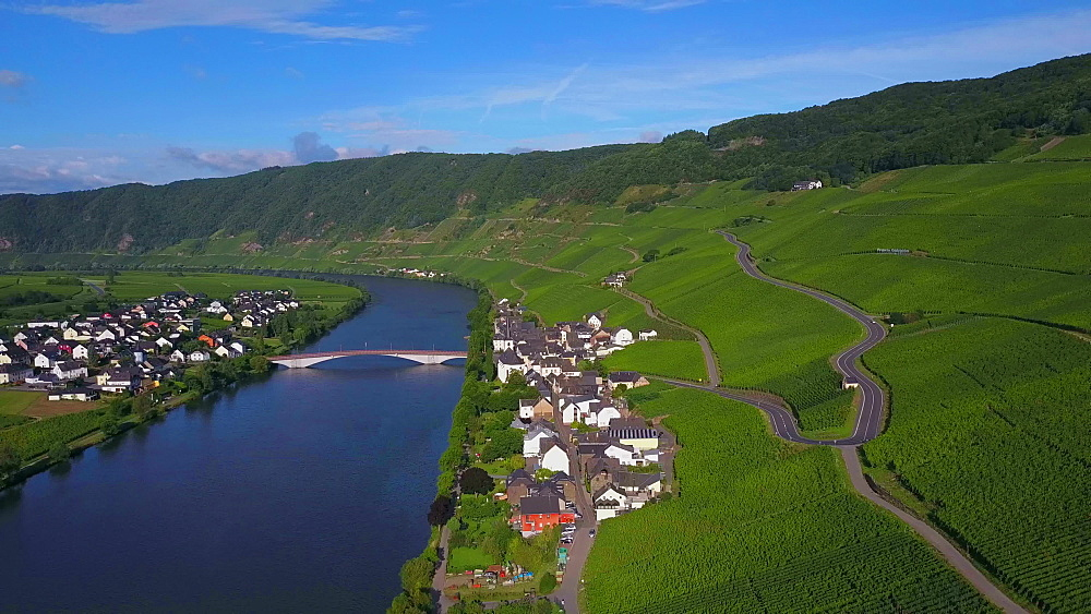 Aerial view of the wine village of Piesport, River Moselle, Moselle Valley, Rhineland-Palatinate, Germany - 396-8673