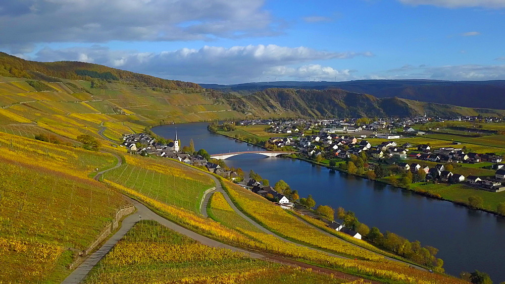 Aerial view of vineyards in autumn near Piesport, Moselle River, Moselle Valley, Rhineland-Palatinate, Germany - 396-8883