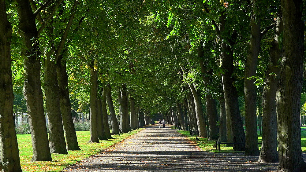 Avenue in the Palace Gardens in Schwerin, Mecklenburg-Western Pomerania, Germany