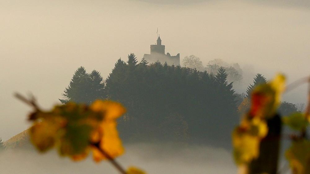 Ruin of Saarburg Castle in autumn landscape, Saarburg, Saar Valley, Rhineland-Palatinate, Germany, Europe