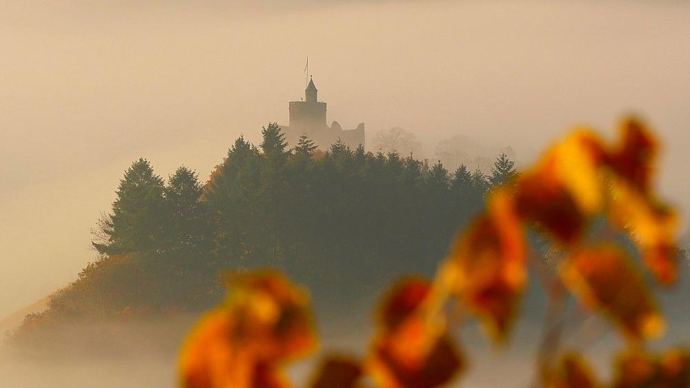 Ruin of Saarburg Castle in autumn landscape, Saarburg, Saar Valley, Rhineland-Palatinate, Germany, Europe - 396-9764