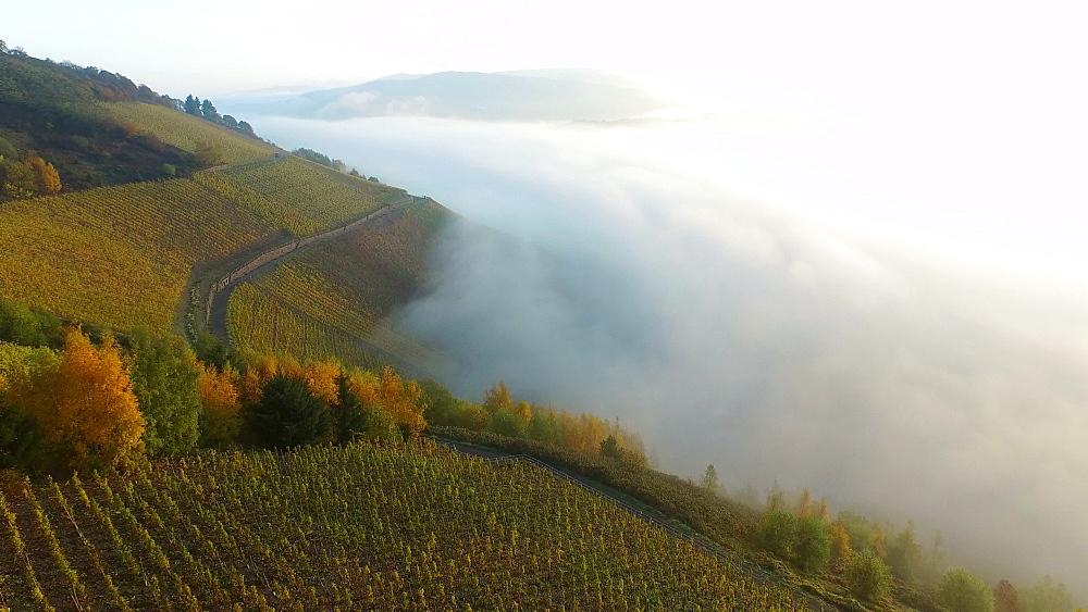 Vineyards in autumn, Saarburg, Saar Valley, Rhineland-Palatinate, Germany - 396-9771