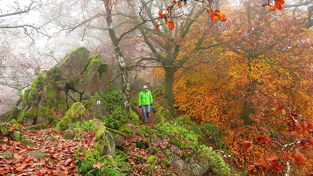 Female walker in autumnal forest, Mount Maunert near Freudenburg, Saar Valley, Rhineland-Palatinate, Germany, Europe