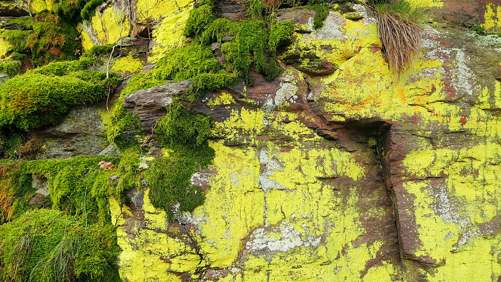 Moss-covered quartzite rocks in the natural forest Tabener Urwald (Taben Primeral Forest), Taben-Rodt, Rhineland-Palatinate, Germany, Europe