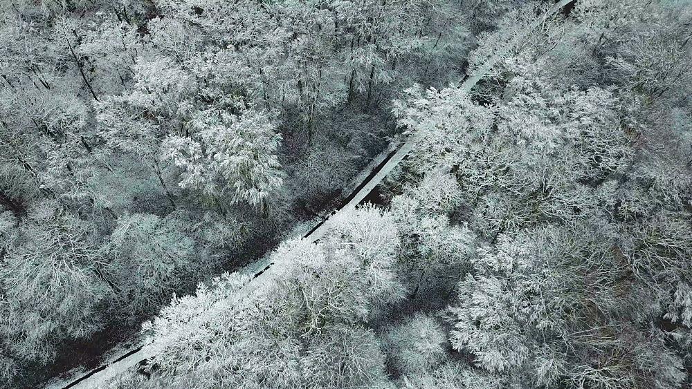 Aerial view of winter forests near Saarburg, Rhineland-Palatinate, Germany, Europe - 396-9882