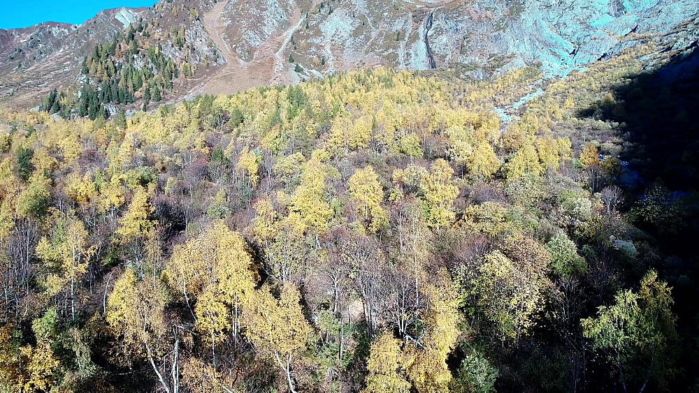 Europe, France, Chamonix, Le Tour, autumn trees - 733-8122