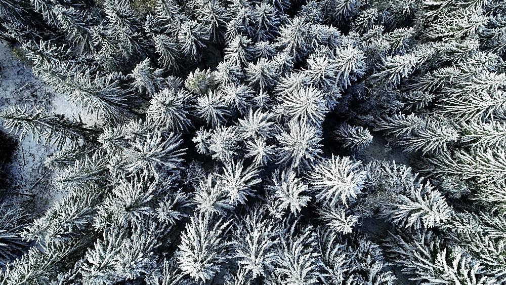 Europe, France, Haute Savoie, Rhone Alps, Chamonix, early season snowfall in autumn - 733-8123