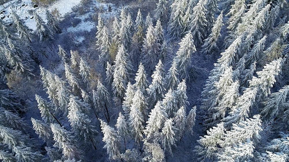 Europe, France, Haute Savoie, Rhone Alps, Chamonix, Le Tour, early season snowfall in autumn - 733-8126