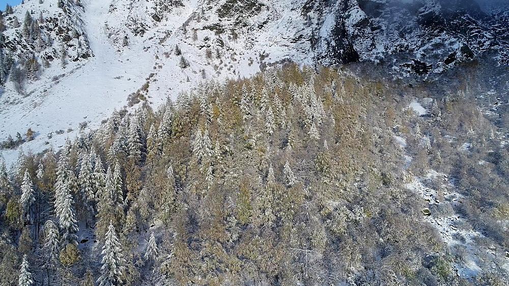 Europe, France, Haute Savoie, Rhone Alps, Chamonix, Le Tour, early season snowfall in autumn - 733-8127