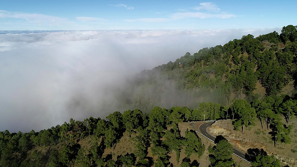 A mist covered forest, UNESCO Biosphere Site, La Palma, Canary Islands, Spain, Atlantic, Europe